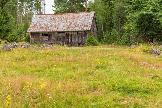 Flowering meadow at an abandoned old shed at the forest edge