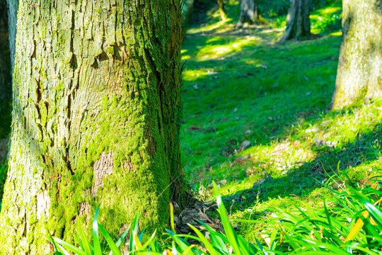 森林の樹木と苔 エコイメージ 地球イメージ