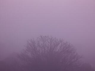 krajobraz mgła drzewa jesień natura niebo chmury
