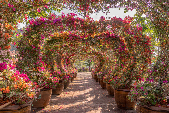 The colorful bougainvillea arch is a heart-shaped decoration for tourists to walk in..