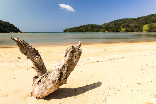 Driftwood on the whote sand beach at Layan, Bang Tao Bay, Phuket, Thaiand