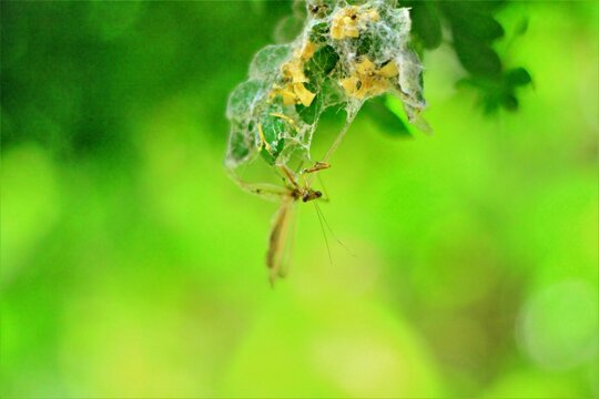 increíble foto de Mantodeos atrapado en telaraña con fondo borroso