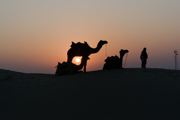 Silhouette of camels in the desert with owners