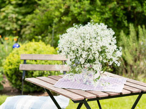 blooming Silverfog- beautiful english style landscape garden with  – Euphorbia hypericifolia with wooden garden furniture, boxwood plants and colourful flower bed at the back