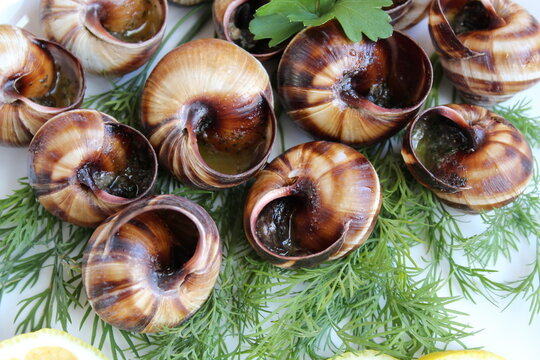 Cooked grape snails in a plate with herbs