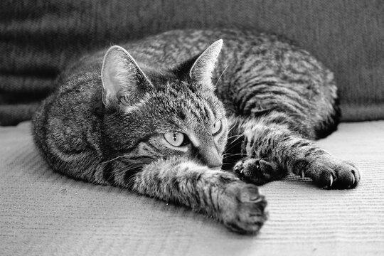 Katze auf Couch