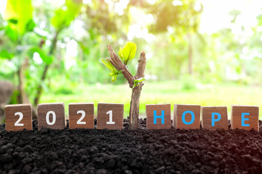 New year 2021 is hope concept in wooden blocks with natural background and a dry branch with a growing sprout and new leaves.