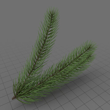 Fir tree branch 3