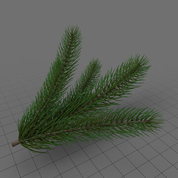 Fir tree branch 2