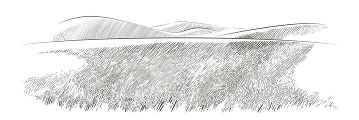 Fototapeta Vector sketch Green grass field on small hills. Meadow, alkali, lye, grassland, pommel, lea, pasturage, farm. Rural scenery landscape panorama of countryside pastures. illustration