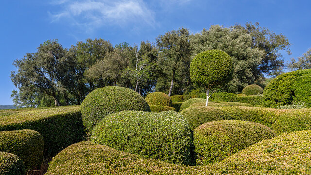 Summer in the park. Fantastic  landscape with geometrically trimmed shrubs. Travel France.