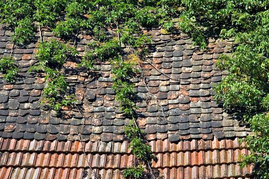 Verwittertes , teilweise zugewachsenes Hausdach