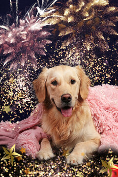 Golden retriever lying in front of fireworks under a pink blanket