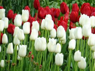 Tudor Schleurholts bloemen