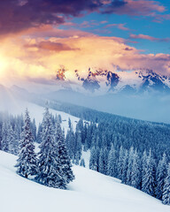 Wall Mural - Attractive winter landscape and covered snow trees.