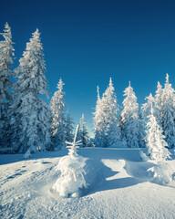 Wall Mural - Beautiful winter trees. Carpathian, Ukraine, Europe.