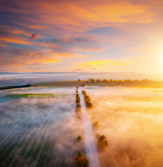 Wall Mural - Breathtaking view from a drone flying over the morning agricultural land.