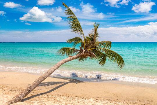 Palm tree over beach