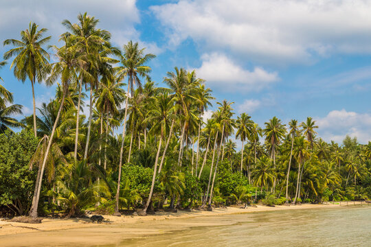 Tropical beach at summer day