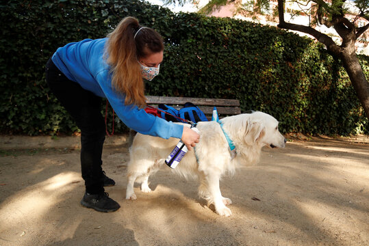 Andrea Galofrem, dog-assisted intervention technician, sprays disinfectant on dog Soul before arriving for a therapy at Escola Iris in Sant Vicenc dels Horts