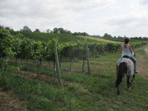 Ausritt im Weingarten