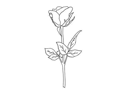 Flowers Line Art Arrangements. Line art flower on greeting card, frame, shopping bags, wall art, telephone boxes and t-shirts.
