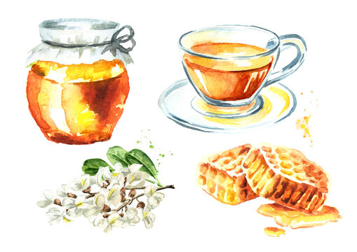 Honey, tea and acacia or Sophora Japonica flower set. Hand drawn watercolor illustration isolated on white background