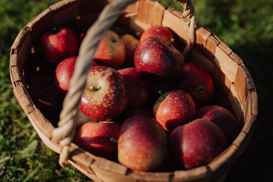 Close up of apples in basket