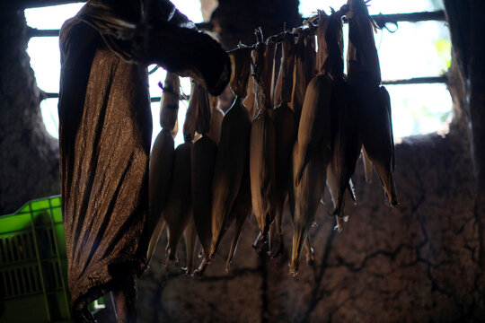Corn cobs hang from the ceiling of the home of a farmer's family, in La Palmilla, Guatemala