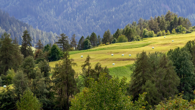 Round hay bales wrapped in a white plastic cover are lying in a beautiful green meadow near Stelvio, South Tyrol, Italy