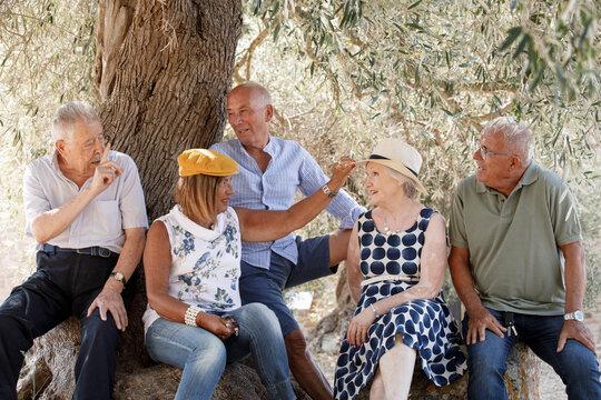 Gruppo di anziani signori si rilassa e si diverte seduti all'ombra di un ulivo