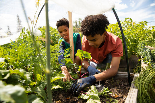 Boys growing vegetables in planter box