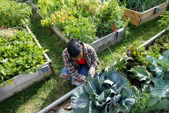 Overhead view of girl working in community garden