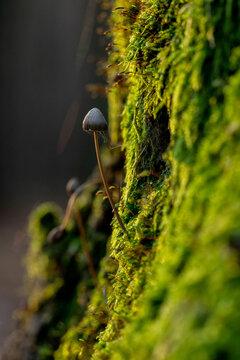 mushrooms in the autumn forest , mushrooms macro in forest , Mushroom in the forest close up