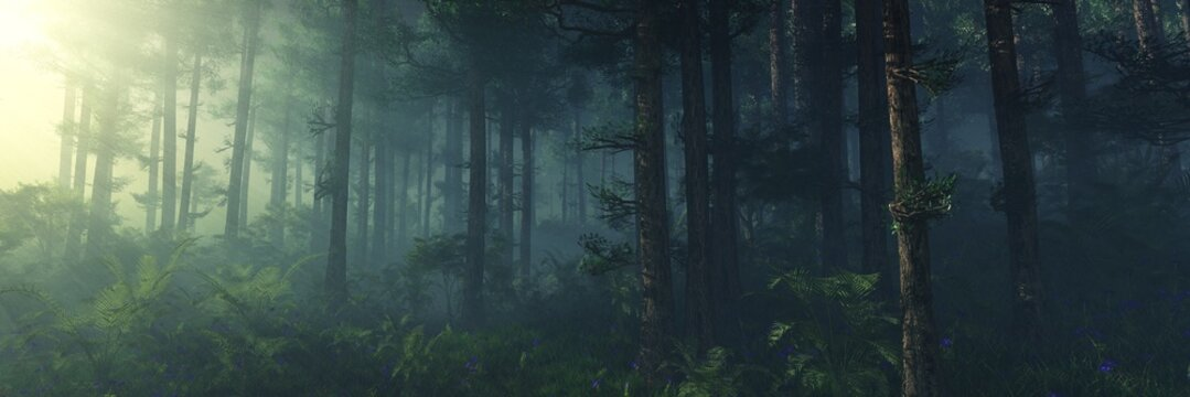 Morning in the forest, forest in the rays of the morning sun, trees in the rays, park in the fog, trees in the haze