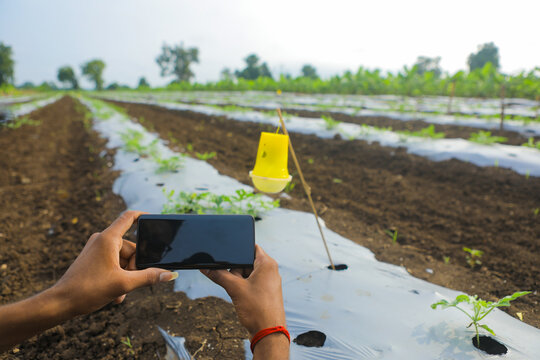 Young man Holding smartphone in hand and taking photo at watermelon field