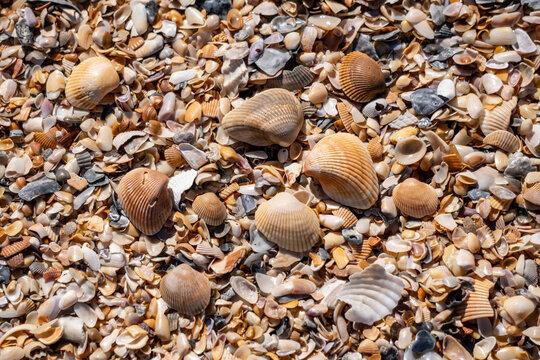Mound of shells on the beach at Anastasia State Park Florida