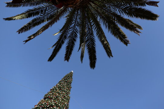 A Christmas tree is seen next to a palm tree at the Citadel Outlet mall, as the global outbreak of the coronavirus disease (COVID-19) continues, in Commerce