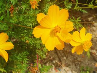 가을 들판의 노란 꽃 클로즈업