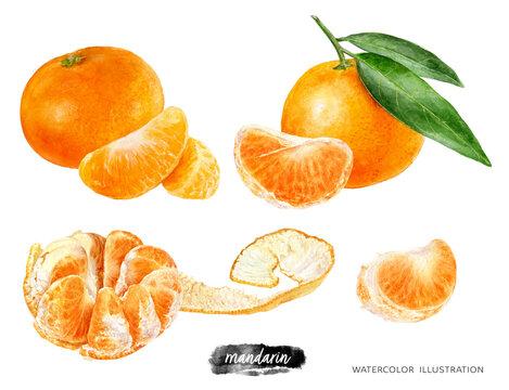 Mandarin fruit set watercolor illustration isolated on white background