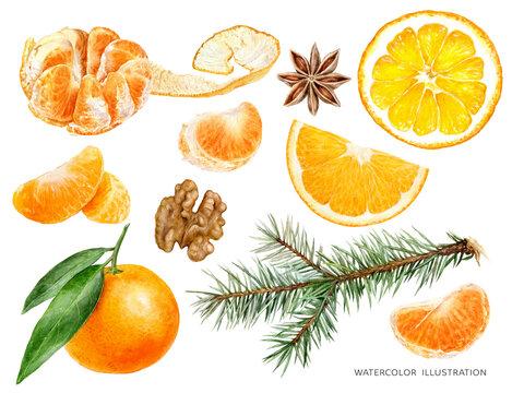 Mandarin fruit orange slice anise star walnut spruce twigs with cone watercolor illustration isolated on white