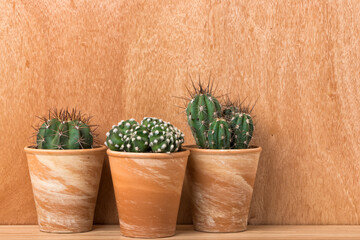 Three cactus plants in terra cotta flower pots in front of wooden wall