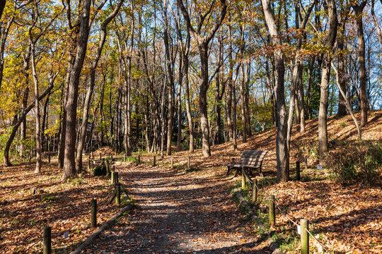 秋イメージ 落ち葉が積もる公園