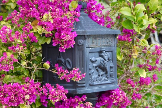 mailbox in the garden with flowers