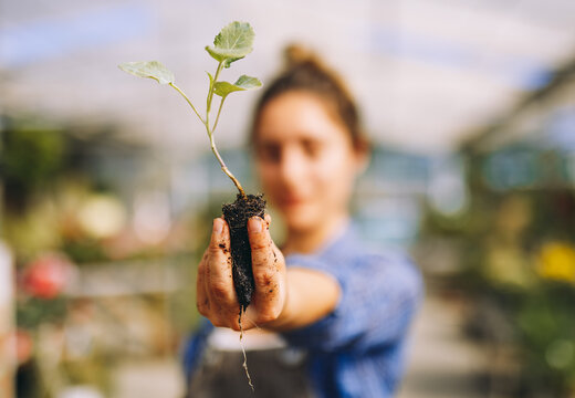 Woman holding green seedling with soil