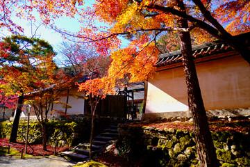 秋の二尊院
