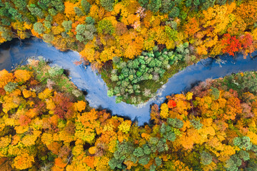 Blue river and colorful autumn forest, aerial view of Poland
