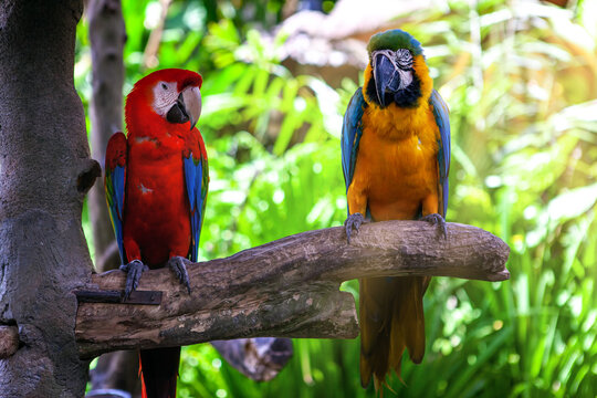 Two colorful macaw parrot sitting on branch. pair of birds on summer background.