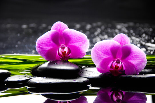 Zen lifestyle; pile of zen Stones and two pink orchid flowers and long green leaves on black background.