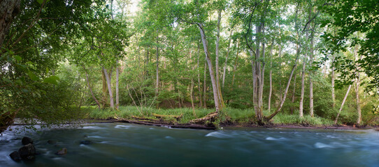 The river and streams flowing slowly in deep green forest, ravine and tall trees